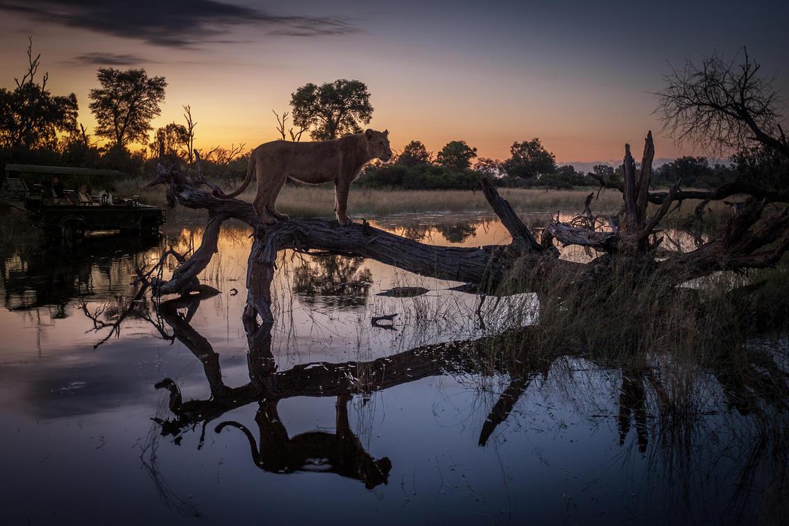 Safari Scenary