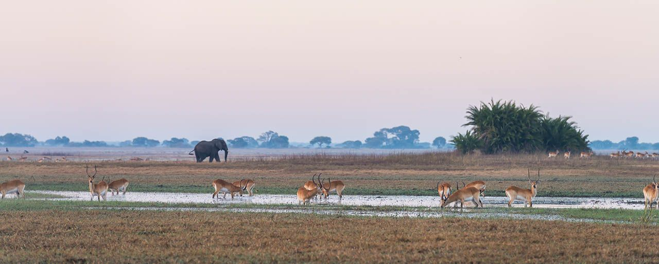 Conservation Kafue-Style