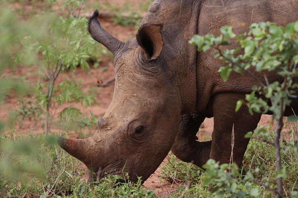 A special sighting of a rare white rhino in the Mosi-oa-Tunya National Park © WanderGlider