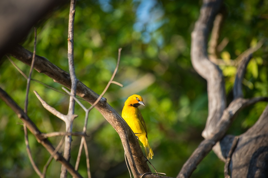 Sindabezi Island hosts a colourful and diverse array of bird species © Gerben van der Waals