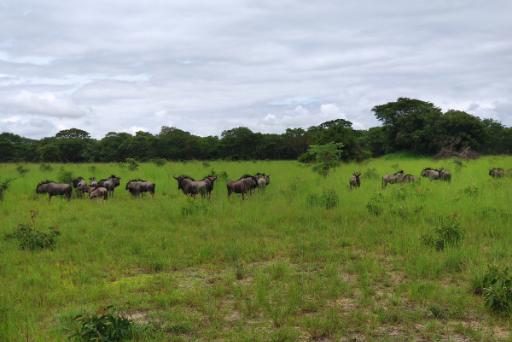 CHAMINUKA Game Reserve